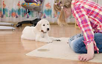 Carpet Cleaning Services Johnsonville